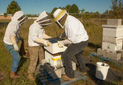 BeeLoved Trading Honey Harvest