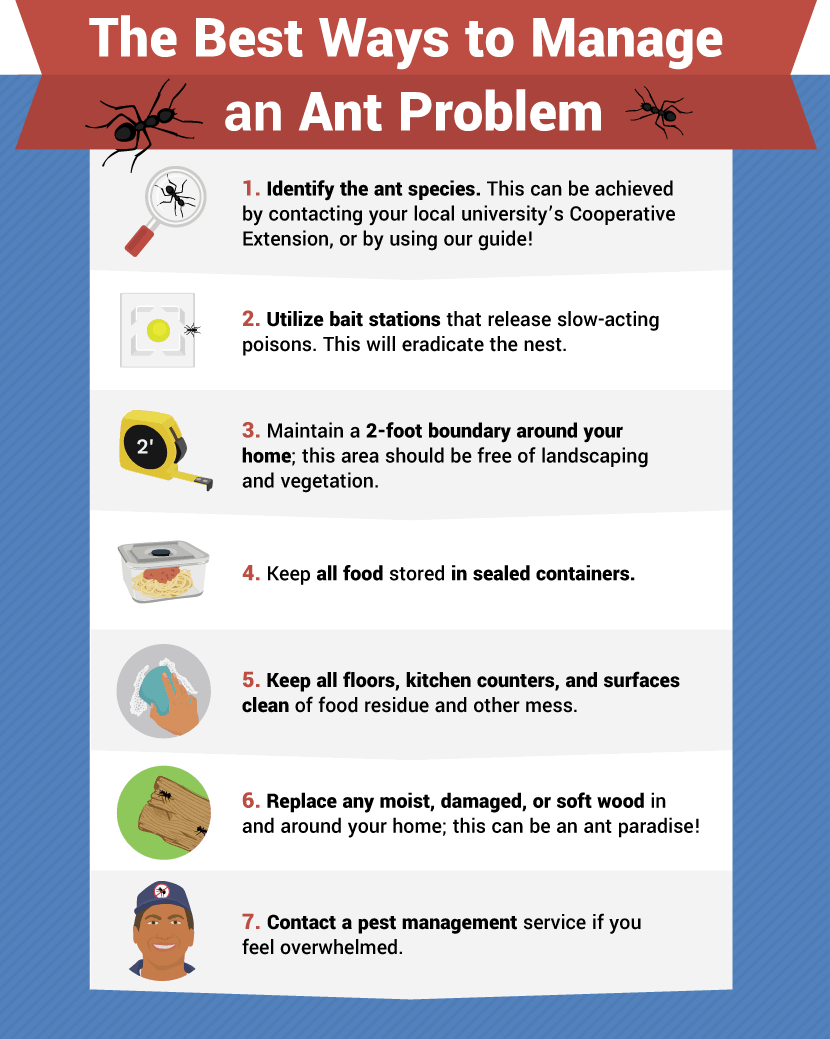 How getting rid of ants in your house is simple by using these methods