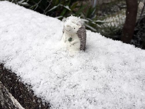 雪とハリネズミ