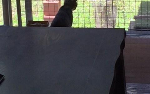 どんどん大きくなる猫