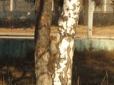 wpid-mntsdcard_ExternalSDDCIMBlog22-Squirrel-at-Chalpon-Ata.JPG.jpg