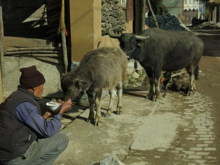 41 - Yuanyang - village