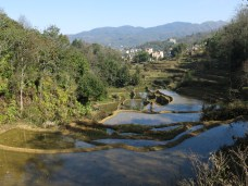 49 - Yuanyang - rice terraces