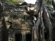 29 - Siem Reap - Ta Prohm