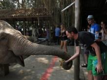 08 - Chiang Mai - Elephant nature park