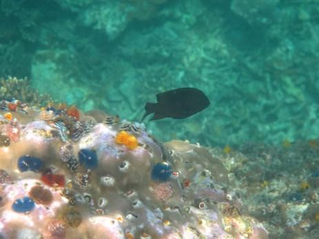 40 - Koh Tao - snorkelling