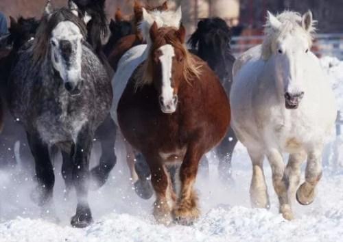 馬刺し 馬の種類