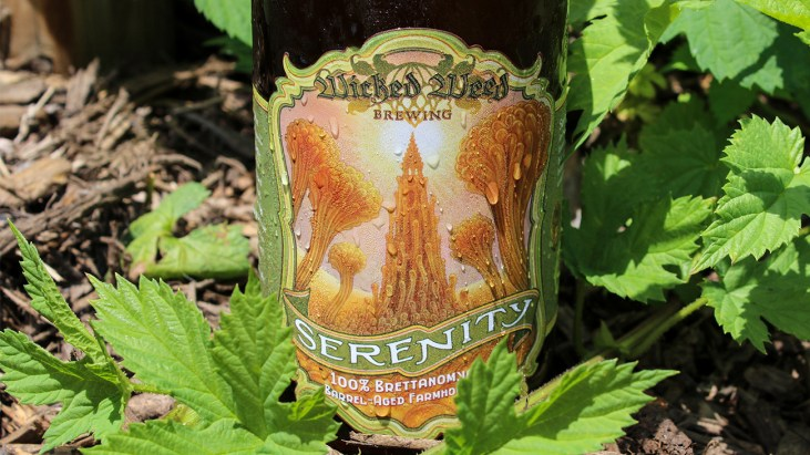 Steph's New Brew Review: Serenity