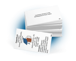 Beer Exam School flashcards, stacked set.