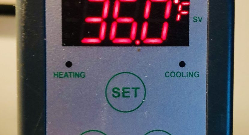 the best temp controller for keezer