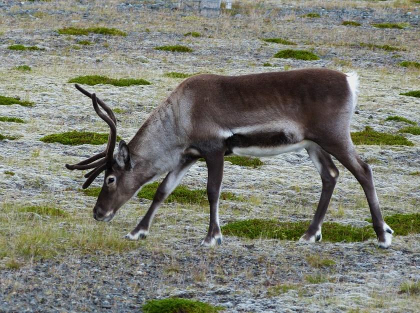 Tiere Island (1 von 1)