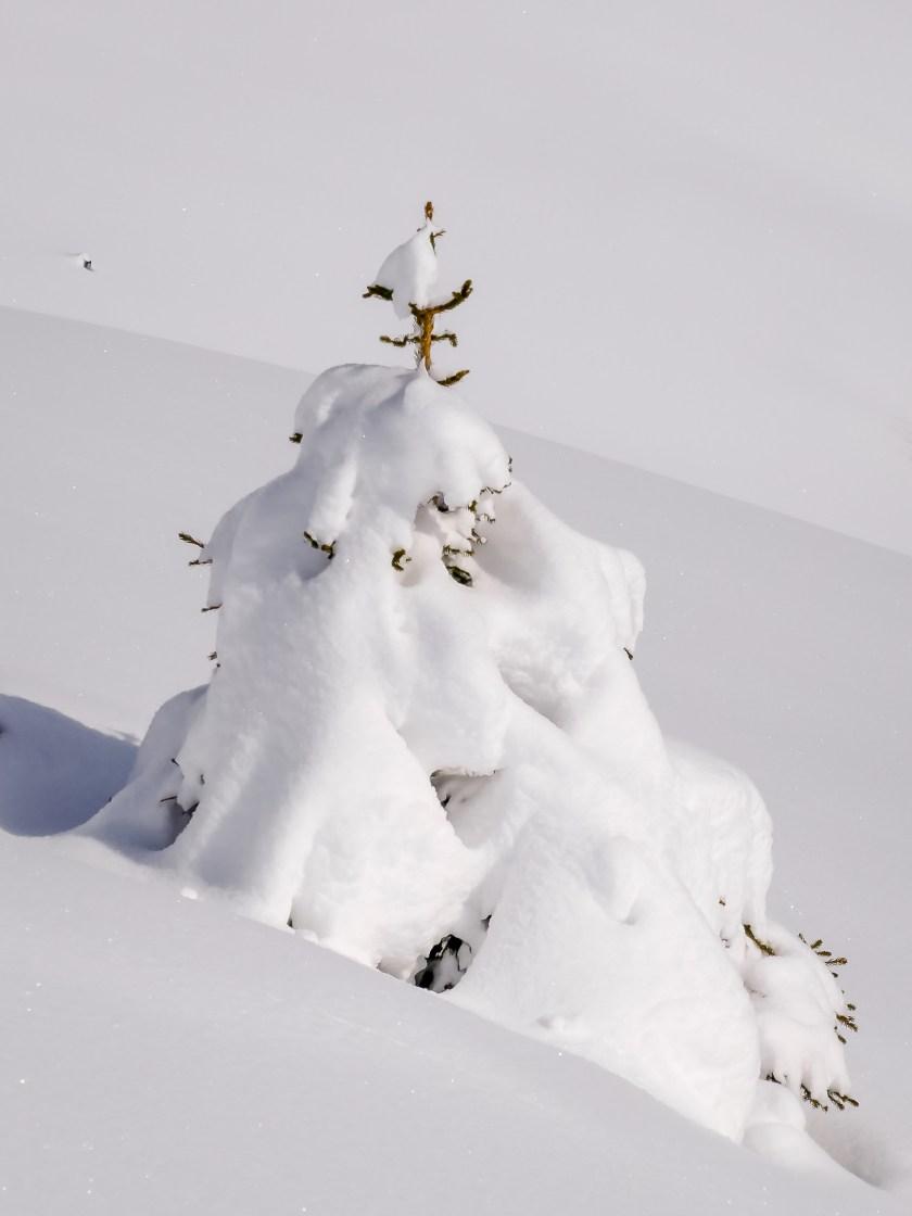 nach dem grossen Schneefall Arosa-1100148