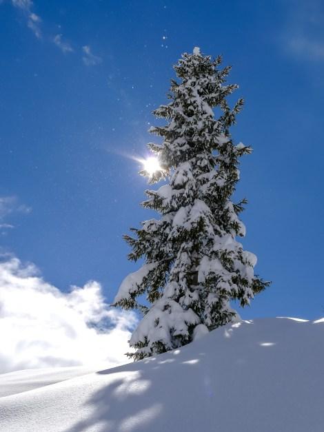 nach dem grossen Schneefall Arosa-1100199