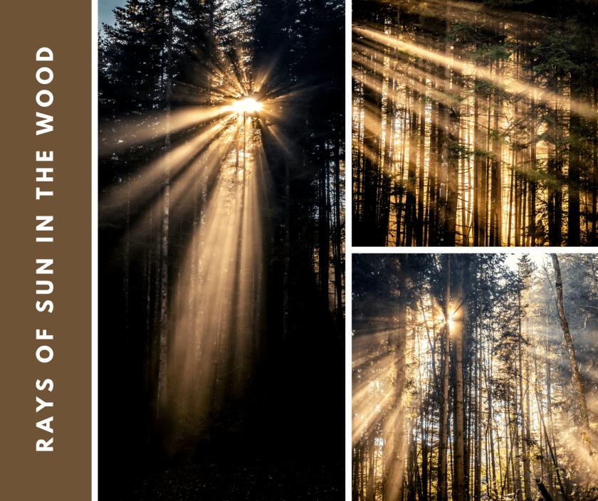 Am frühen Morgen im Wald. Der Nebel lichtet sich langsam, die Sonnenstrahlen zaubern eine selten Atmosphäre in den sonst dunklen Dezember Wald.
