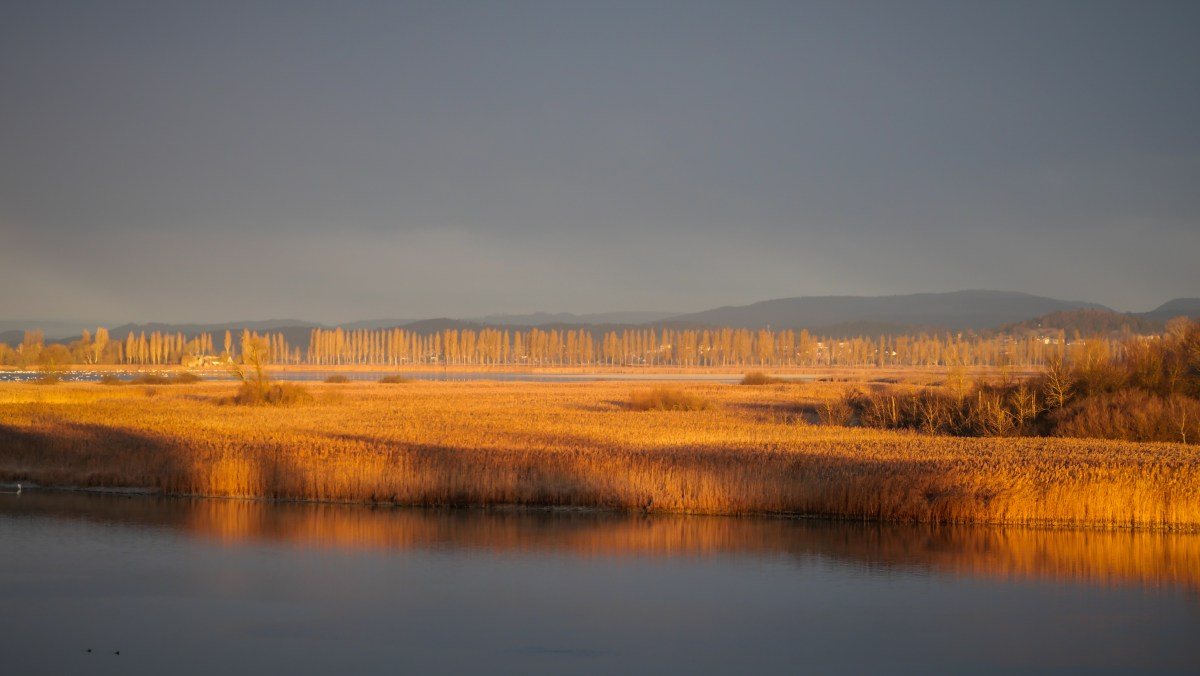 Wollmatinger Ried im winterlichen Abendlicht