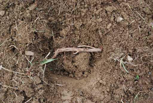 plant your rhizome