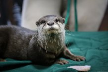Real live river otter. Pontoon's spirit animal