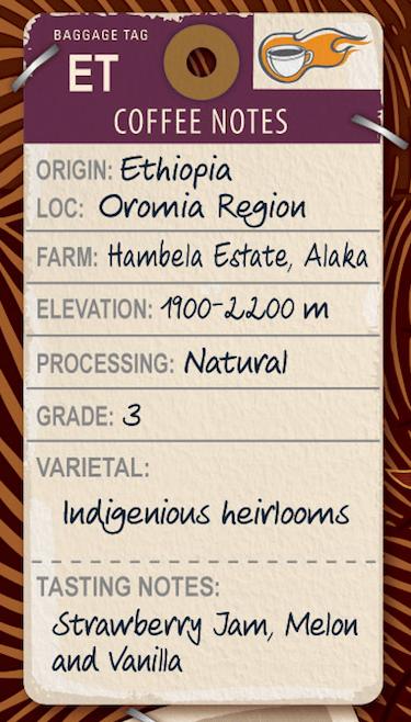 Terrapin Ethiopian bean