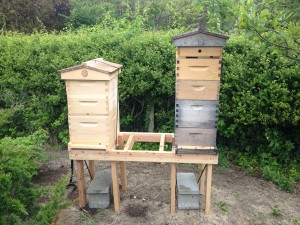2nd Hive 1st Day