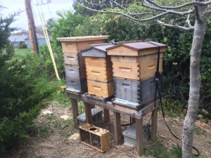 Three Hives in a Row