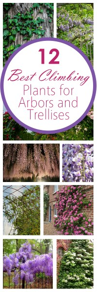 12 Best Climbing Plants for Arbors and Trellises - Bees ...