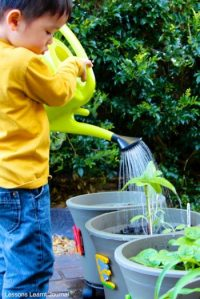 13 Kid Gardening Projects - Bees and Roses