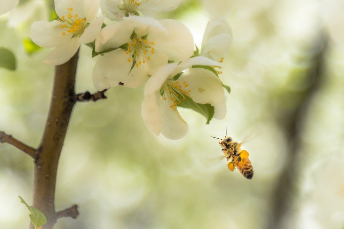 does harvesting hurt bees