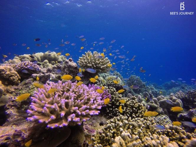 Mu Koh Surin Island Thailand Dream Destination Food Travel Lifestyle Blog
