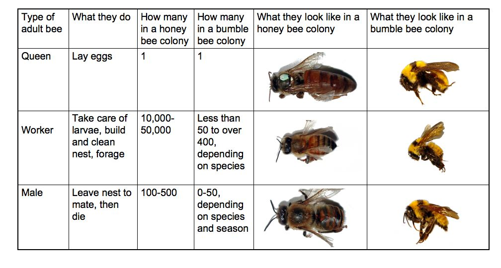 social behavior beespotter university