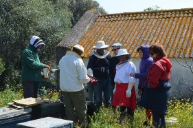 Visiting local beekeeper's apiary. Spring 2015