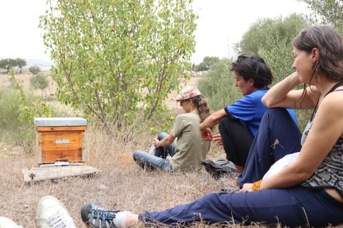 Hive observation