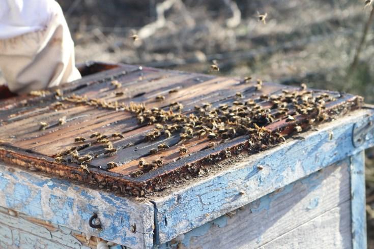Visiting Juan Pedro's apiary