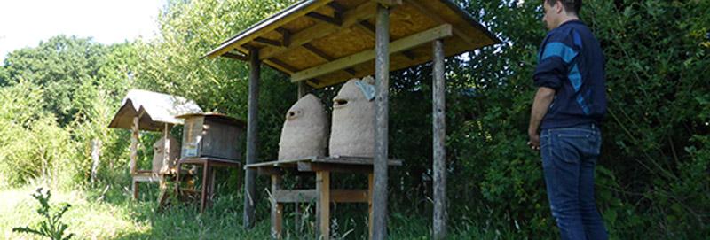 Earth hives
