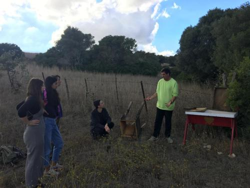 Sharing the story of our first Apijandas's hives