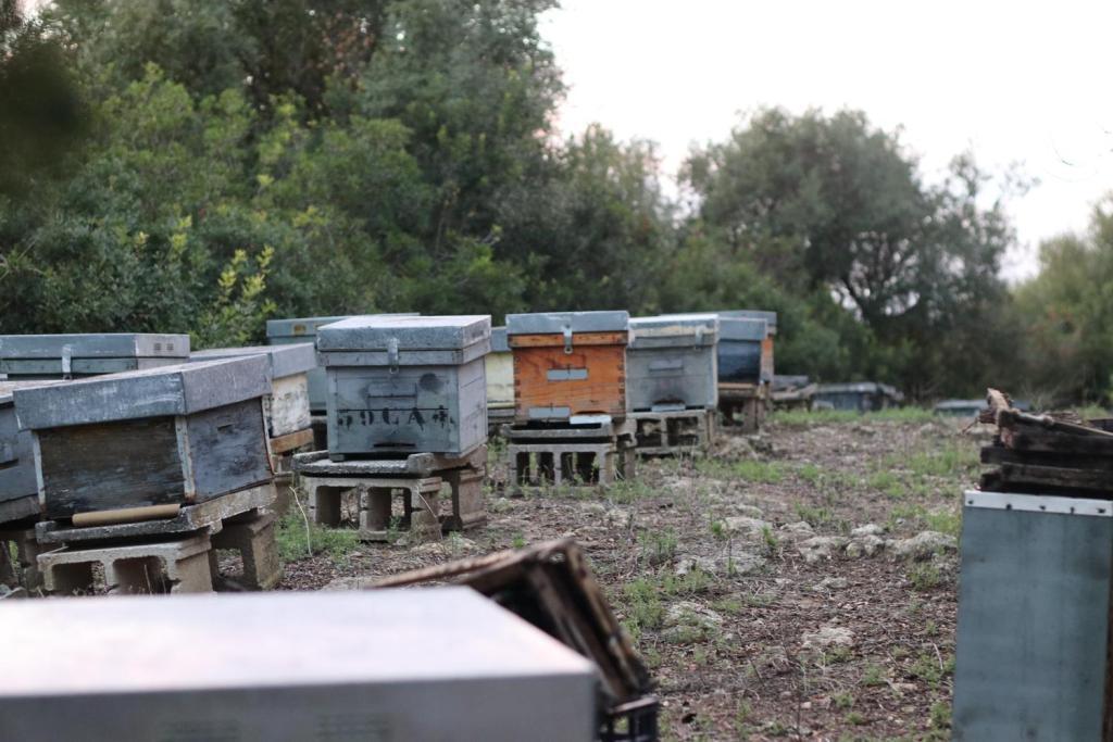 Manolo vigilia, apiary