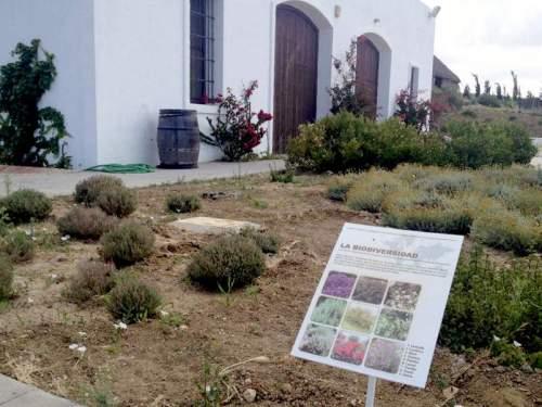 Encuentro de apicultura natural Sancha Pérez