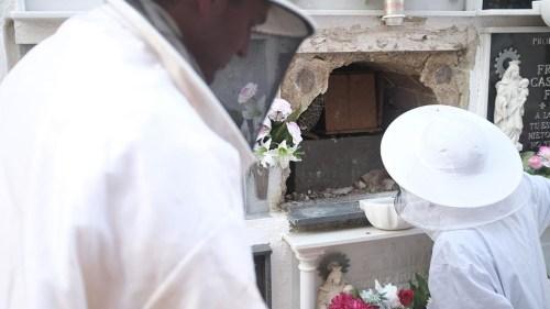 El enjambre en el cementerio de San Fernando