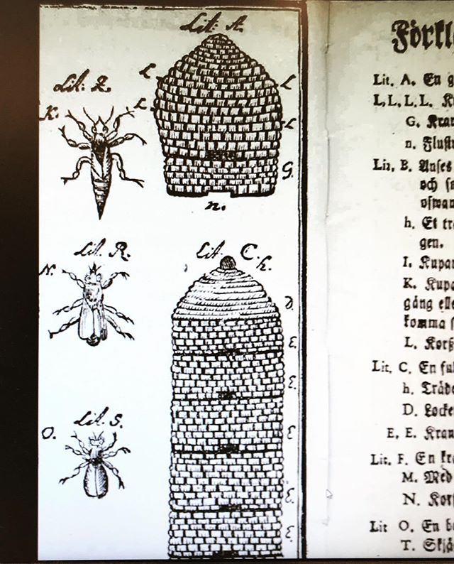 'Have you ever heard about multi-story skeps? Apparently they where in use in the past. This is from a book written by the brother of Carl Linnaeus (Physician, Naturalist And beekeeper!) ' - Sustainable Beekeeping Association Israel
