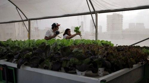 Hydroponic greenhouse on