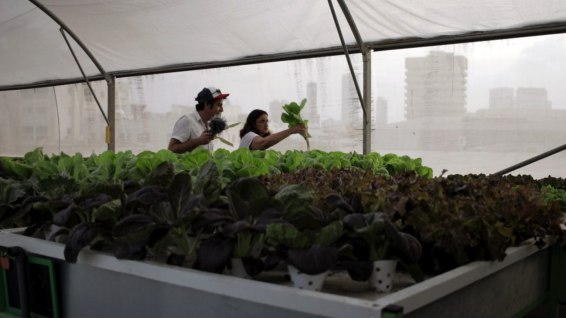 Hydroponic greenhouse on