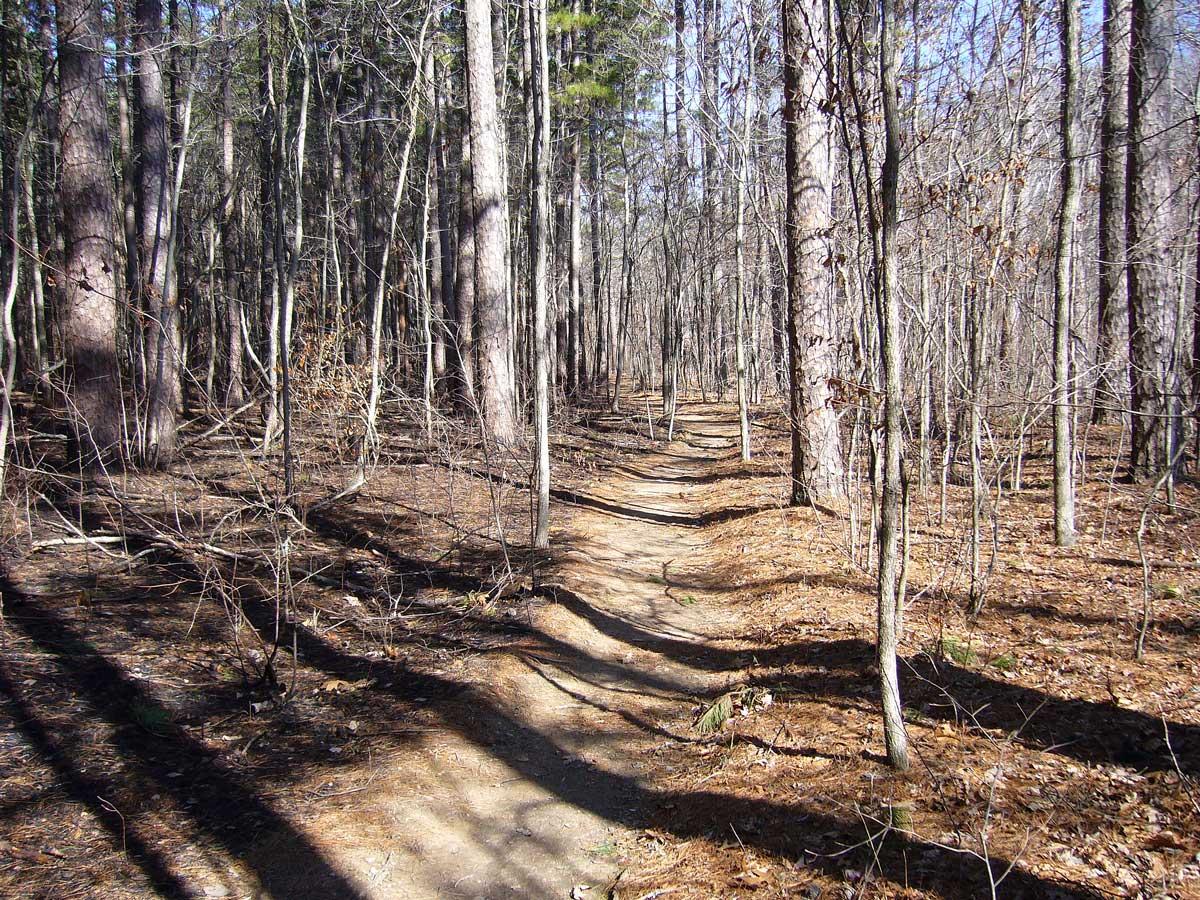pine savanna - fire management