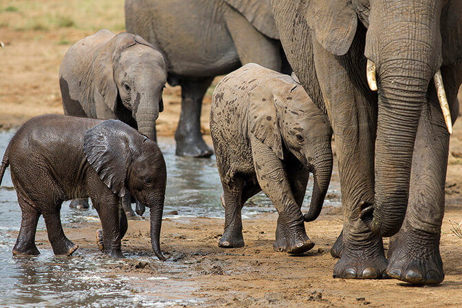 tanzania safari elefanti
