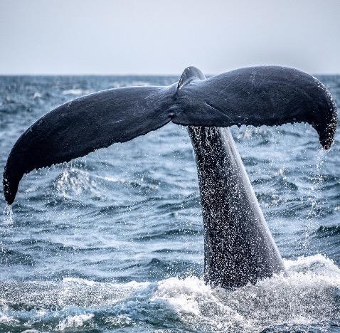 Genova e santuario dei cetacei