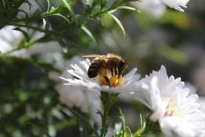voordelen van honing