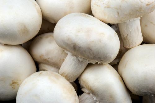 Benefits of Mushroom