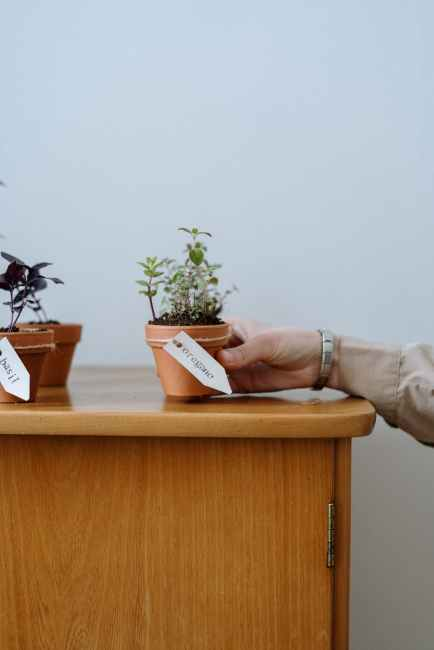 photo of person holding potted plant