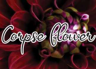 Corpse Flower Font