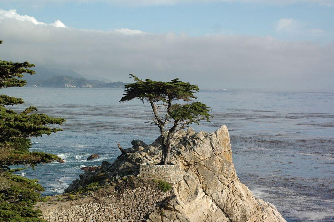 Lone_cypress_tree_Monterey_CA_photo_D_Ramey_Logan.jpg