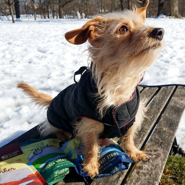 small scruffy dog sitting on a bench with three 4oz bags of treats