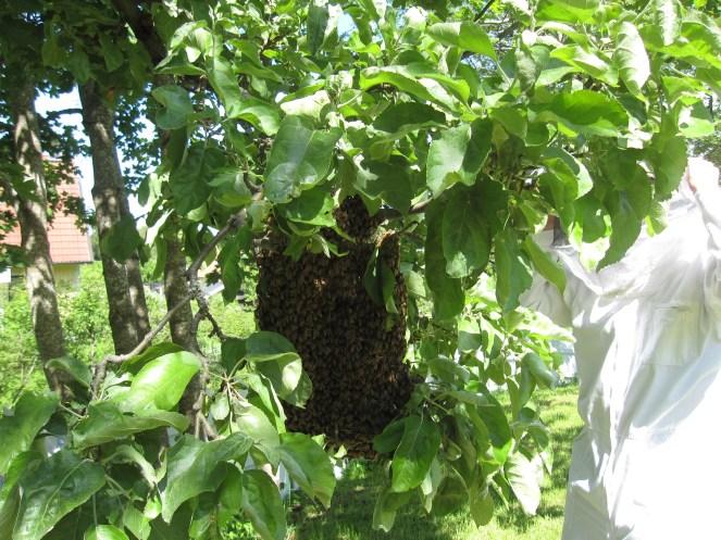 swarm_6956